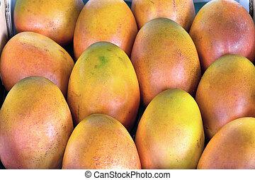 arboleda, crecido, primer plano, mangos