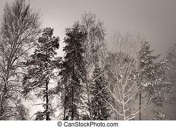 arboleda, invierno
