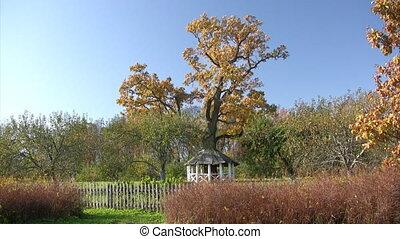 Arbor in autumn park