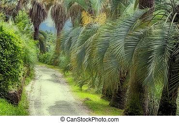 Arboretum of tropical and subtropical plants.