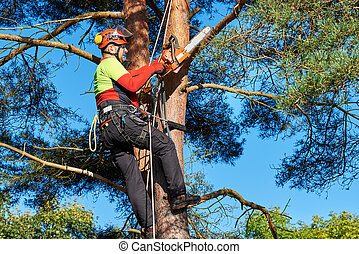 Arborist at work - Lumberjack with saw and harness climbing...
