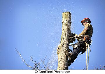 arborist, corte, árbol