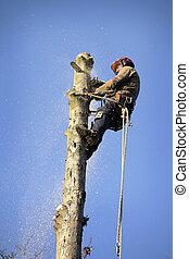 arborist, corte, árvore