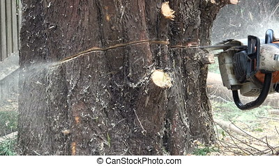 Arborist cutting through a tree trunk - Close up view of a...