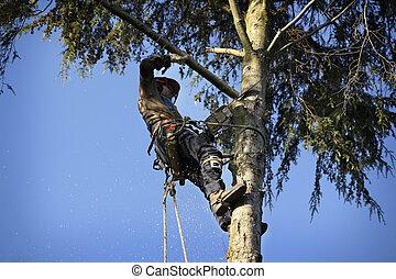 Arborist cutting tree - An arborist cutting a tree with a...