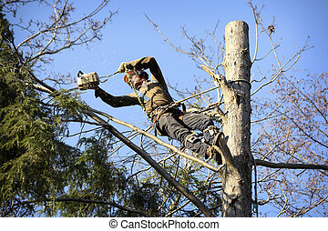 Arborist cutting tree - An arborist cutting a tree with a ...