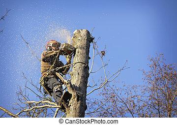 arborist, découpage, arbre