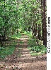 arborizado, caminho, e, alto, árvores pinho