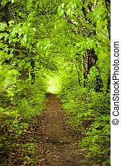 arborize caminho
