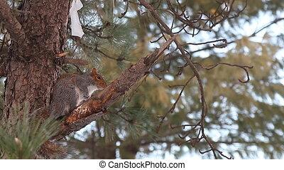 arbre, écureuil, curiosité, créature