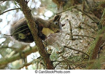 arbre, écureuil