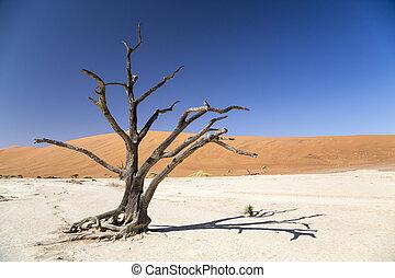 arbre, épine, -, deadvlei, chameau