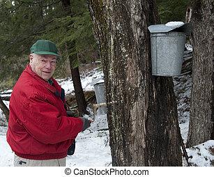 arbre, érable, enregistrer