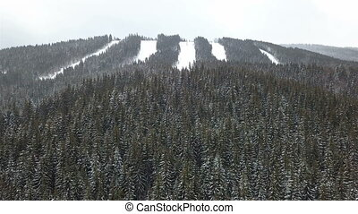 arbre, aérien, neige-couvert, pin, vue