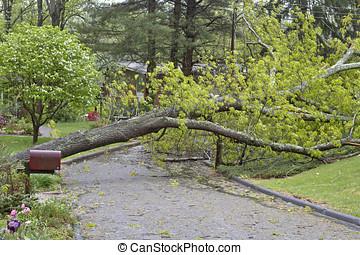 arbre, abîmer, orage