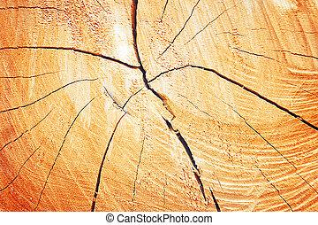 arbre, anneaux croissance, texture