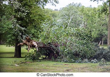 arbre, après, ouragan, par, orage, went, fort