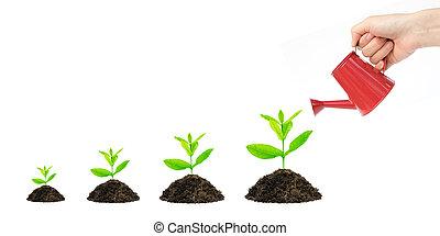arbre argent, croissance financière, plat, concept
