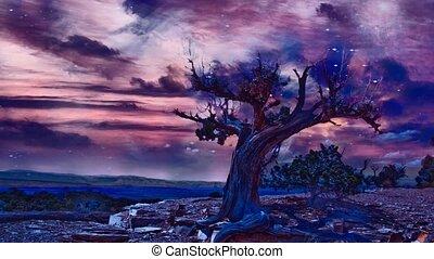 arbre, aride, terre, vieux, rocheux
