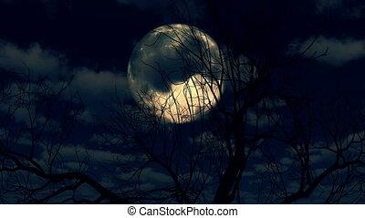 arbre, ascensions, nuages, par, lune