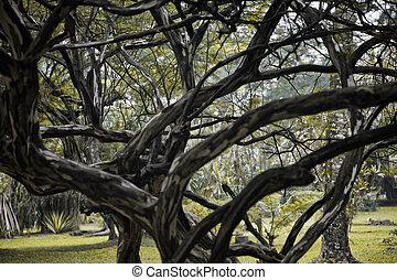 arbre, asiatique