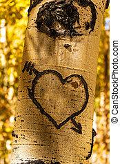 arbre aspen, cœurs