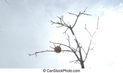 arbre., assoiffé