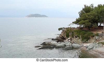 arbre, au-dessus, mer, rocher