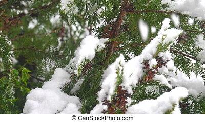 arbre, automne, flocon, pin, neige, 4k