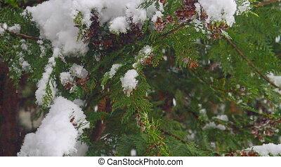 arbre, automne, flocon, pin, neige
