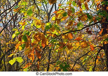 arbre, automne, jaune, pendre, feuilles, chêne, parc