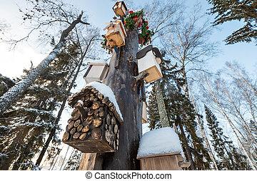 arbre., birdhouses, collection., beaucoup, parc, neige, feeders, hiver, maisons, protection, sous, oiseaux, oiseau, nesting-boxes