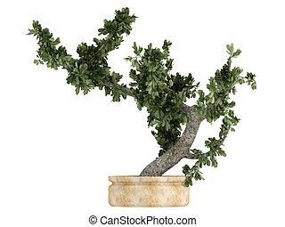 bonsai fleurir pot baobab arbre vert bonsai baobab illustrations de stock rechercher. Black Bedroom Furniture Sets. Home Design Ideas