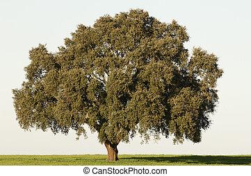 arbre, bouchon
