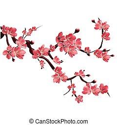 arbre., branche, cerise, floraison, japonaise, illustration...