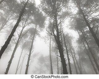 arbre, brumeux, matin, automne, lumière soleil, forêt pin