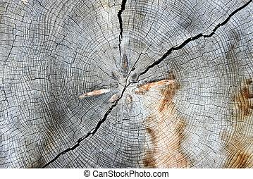 arbre, cadre, entiers, anneaux, croissance
