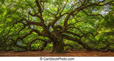 arbre chêne, ange, panorama