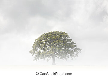 arbre, chêne, jour, brumeux