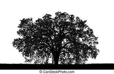 arbre chêne, silouette