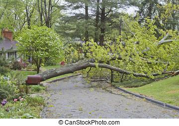 arbre chêne, topples, temps, travers, route