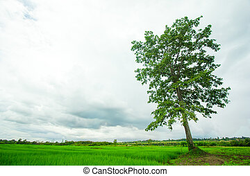 arbre, champ vert
