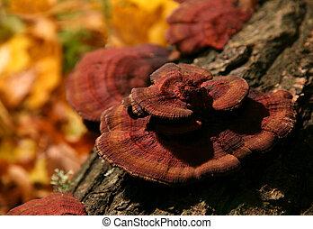 arbre, champignon