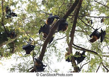 arbre, chauves-souris