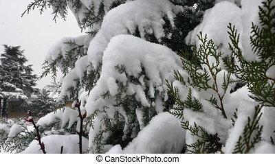 arbre, chute neige