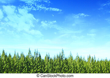 arbre, ciel, fond, été, forêt, pin