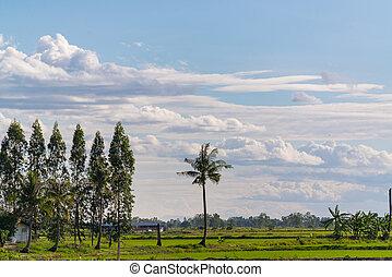 arbre ciel fort au dessus - Arbre Ciel