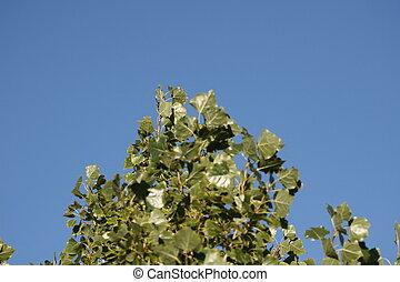 arbre, ciel
