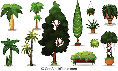 arbre, collection