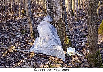 arbre, collection, sac plastique, bouleau, sève